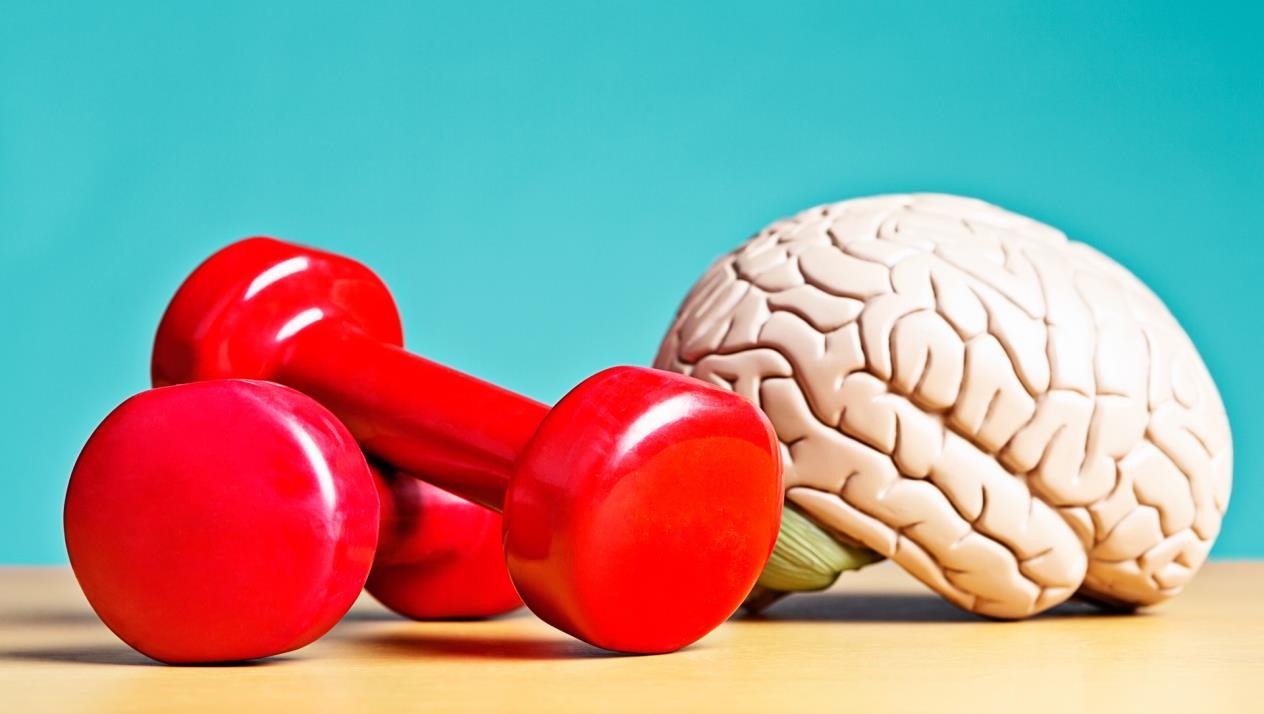 7 عوامل تؤثر على صحة الدماغ تعرف عليها – رادار نيوز